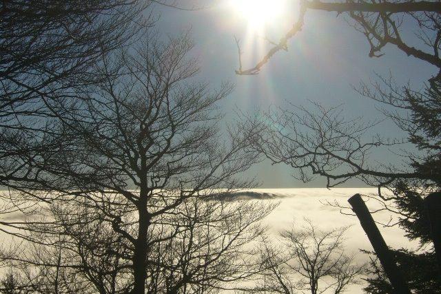 Pohled z Jedlové, les vystupuje z mlhy v dáli