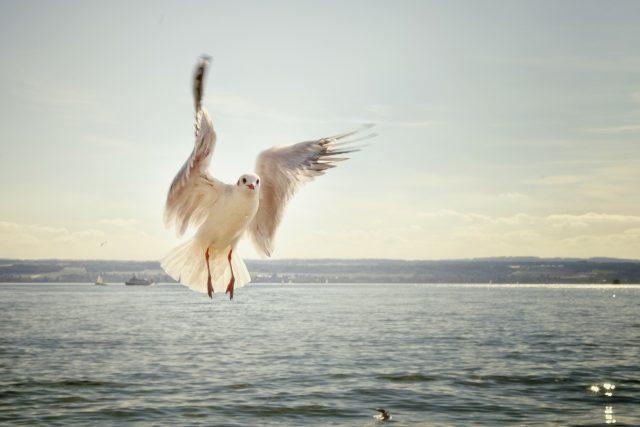 Pták, vodní hladina (ilustrační foto)